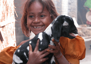 A goat for a young person