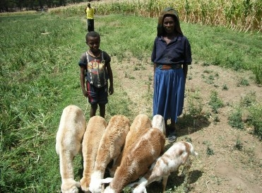 A mother and her son with their herd of goats